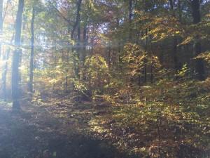 IMG 1522-300x225 in Der Trauermonat November